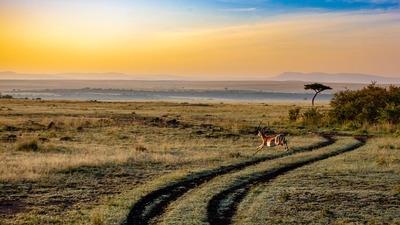antelope-4121962_960_720.jpg
