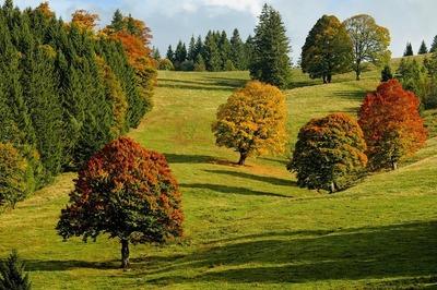 autumn-2800880_960_720.jpg