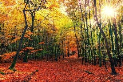 autumn-3804001_960_720.jpg