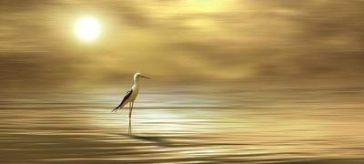 bird-4399812_960_720.jpg