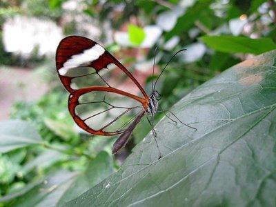 butterfly-1685728_960_720.jpg