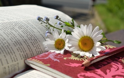 daisies-676368_960_720.jpg