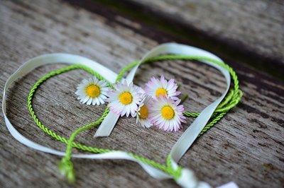 daisy-3392654_960_720.jpg