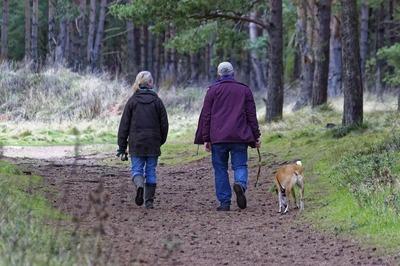 dog-walking-1070076_960_720.jpg