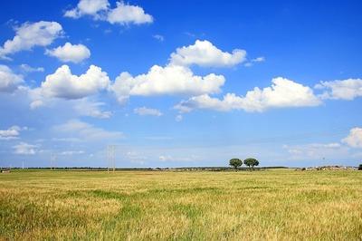 field-2374433_960_720.jpg