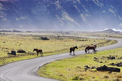 horses-3723666_960_720.jpg