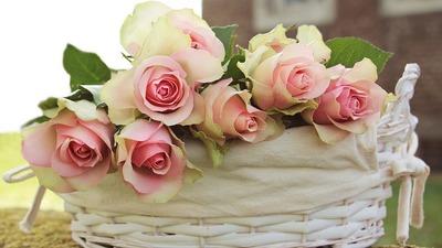 roses-2208357_960_720.jpg