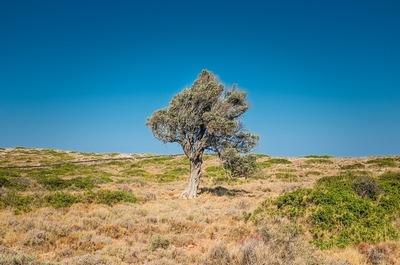 tree-839675_960_720.jpg